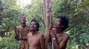 Tangkal Covid-19, Suku Anak Dalam Minum Ramuan Daun Sungkai